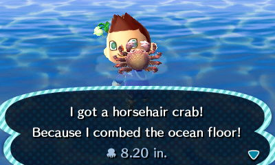 File:Horsehair crab new leaf.jpg