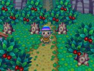 Animal Crossing wikia Pictures 079