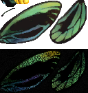 Birdwing Butterfly (City Folk texture design)