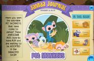 Pet monkeys jamaa journal