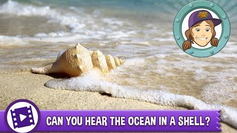 Ask Tierney - Can you really hear the ocean in a shell?