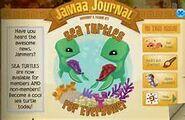 Sea turtle news