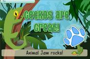 Jam a gram gecko