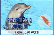 Dolphinjag