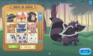 Raccoon on aj
