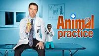 File-Animal Practice promo