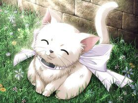 Anime kitty
