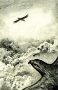 Tobias and another hawk flying The Encounter Japanese illustration