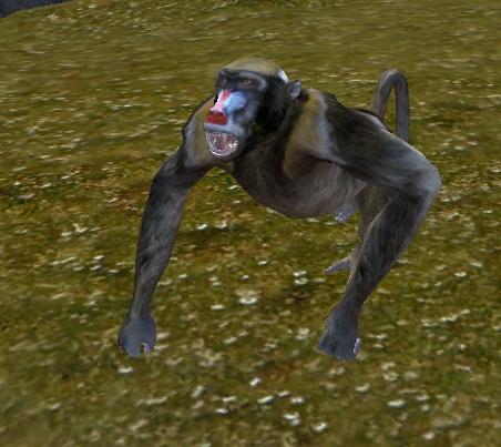 Tamed baboon2