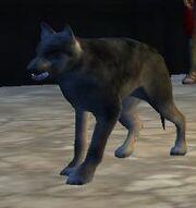 Wolfhound-1-