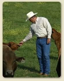 File:Cow feed.jpg