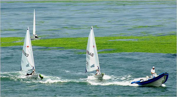 File:Algae 3.jpg