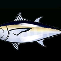 Blackfin Tuna - Rarity: Very Rare, Size: Medium