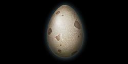 Alligator Egg