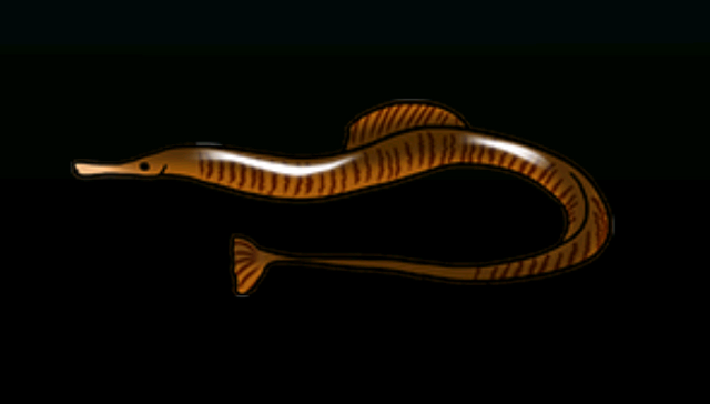 File:PipefishACP.png