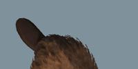Database: Beaver