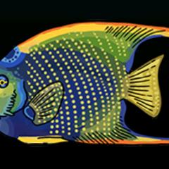 Queen Angelfish - Rarity: Common, Size: Medium