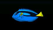 BlueTangACP