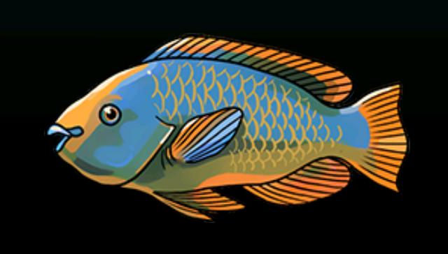 File:RainbowParrotfishACP.png