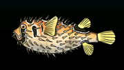 PorcupinefishACP