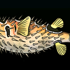 Porcupinefish - Rarity: Common, Size: Medium