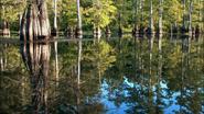 Everglades & Ally-Gators (754)