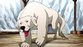 Polar bear dog.png