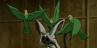 Sparrowkeet