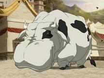 Hippo cow
