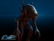 AVP Characters Alien Drone
