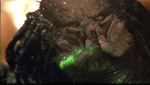 File:Predator 003.jpg