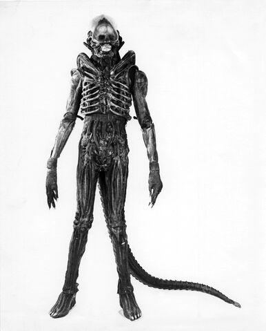 File:01060 Alien Sibthorp.jpg