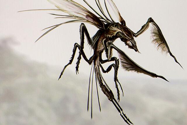 File:Predator fb.jpg