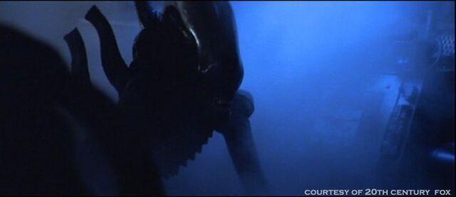 File:Alien-1979-alien-aliens-8255327-654-283.jpg