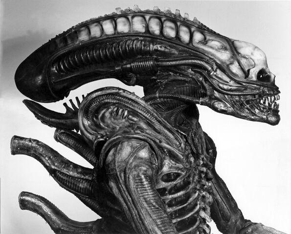 File:01061 Alien Sibthorp.jpg