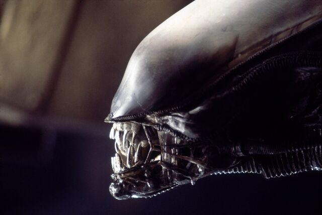 File:Movies xenomorph creatures teeth aliens movie alien giger desktop 4092x2737 hd-wallpaper-993886.jpg