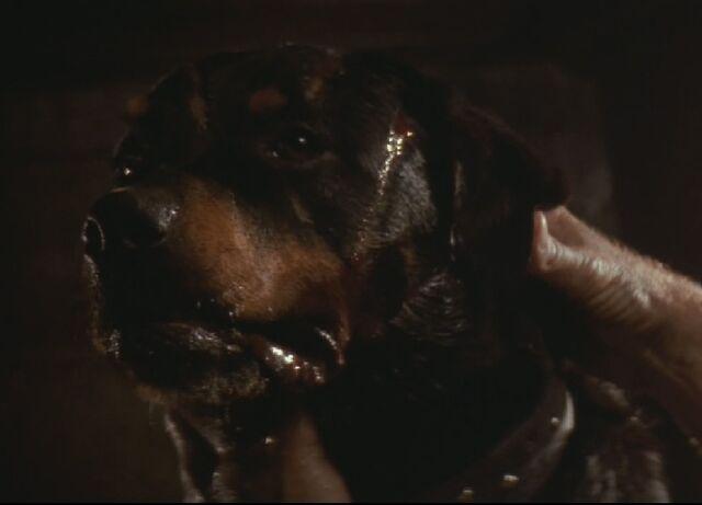 File:Spike the dog.jpg