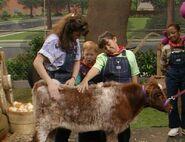 Down on Barney's Farm