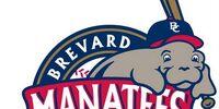 Brevard County Manatees
