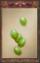 Green Beans (Origins)