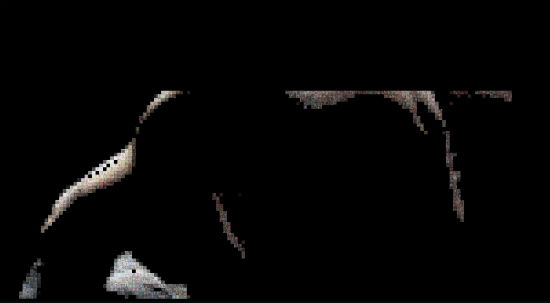 File:Dark-Knight-Rises-Viral-1.jpg