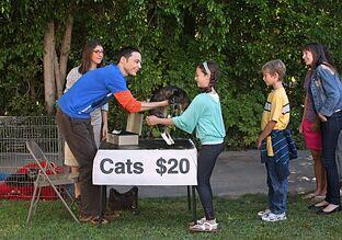 Cats20dollars