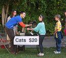 Sheldon Lee Cooper's Cats