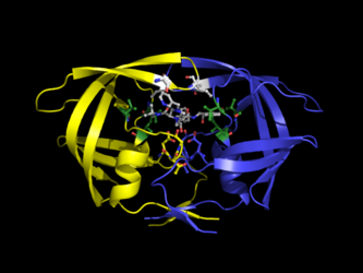 HIV Protease in Complex with Indinavir