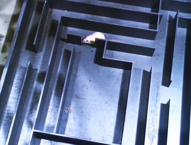 File:The Solid Gold Kidnapping - The rat maze.jpg