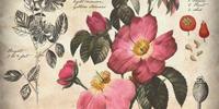 Rose (Flower)