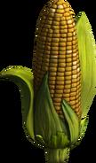 BSI Corn