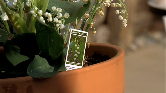 File:4x13 Lily of the Valley.png