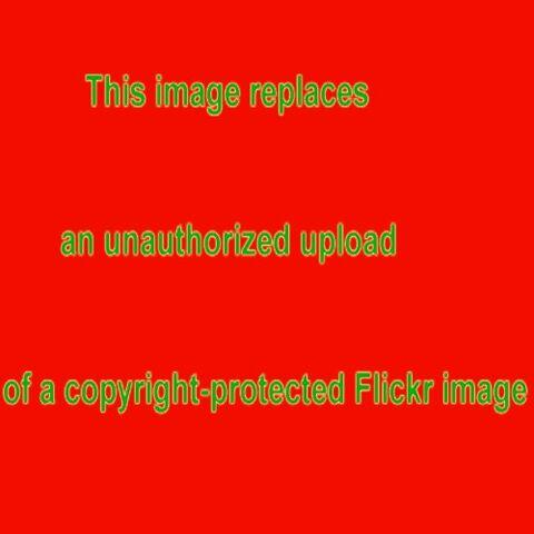 File:1764300108 6c2c8e6451 m.jpg