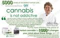 Cannabis is safe and not addictive.jpg